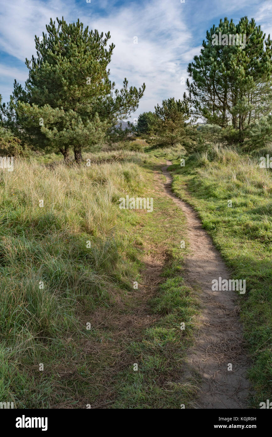 Footpath leading into the distance - metaphor for career path, making tracks, etc. - Stock Image