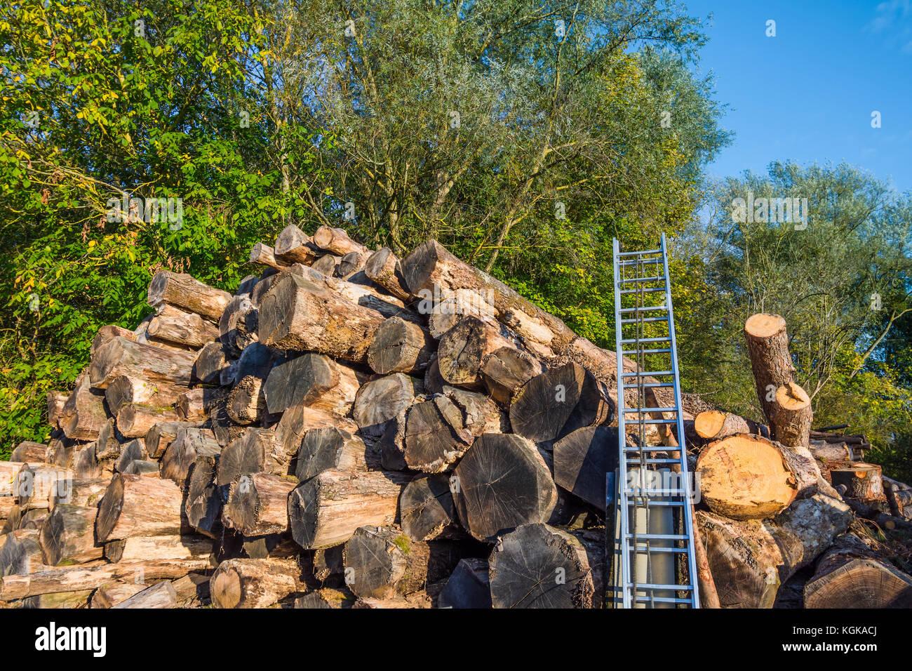 Stack of felled tree trunks - France. - Stock Image