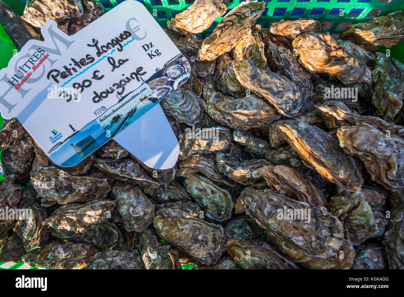 Atlantic oysters for sale in market - France. - Stock Image