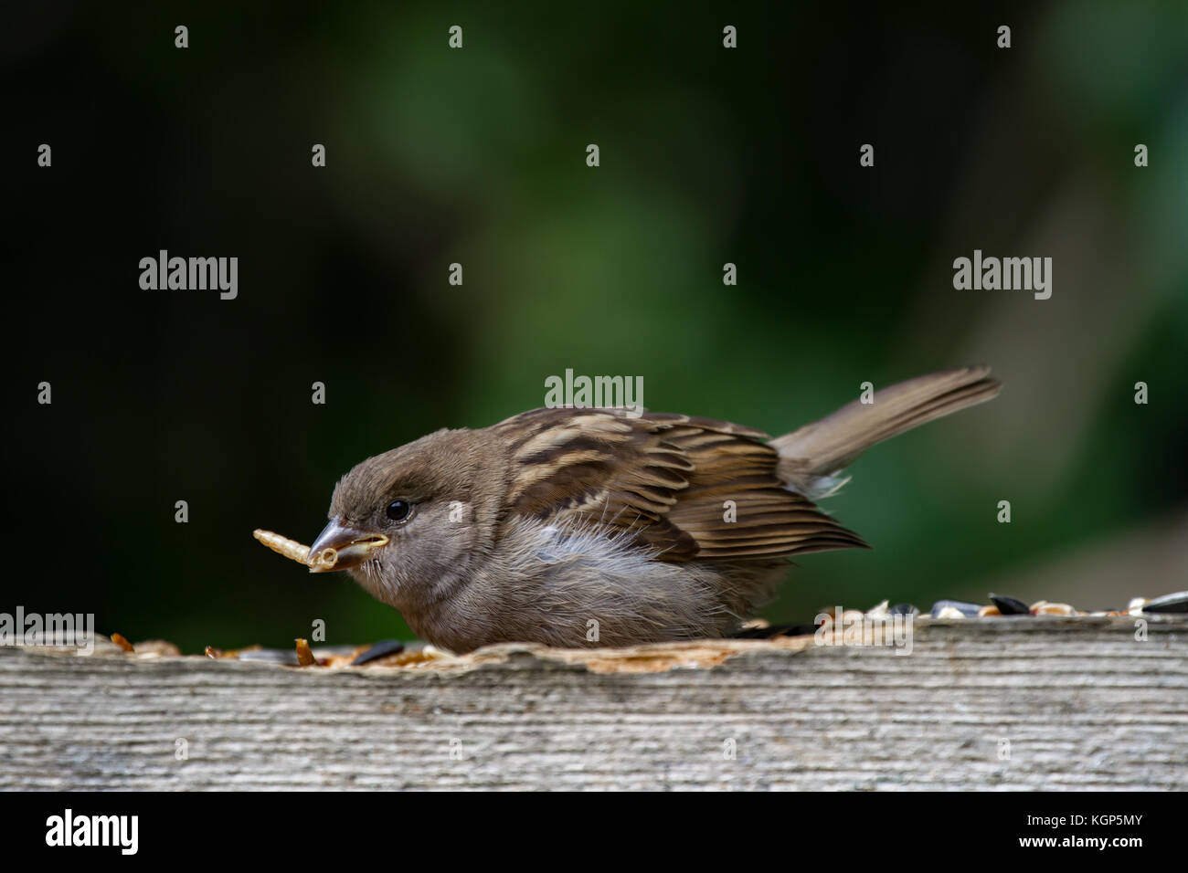sparrows point divorced singles Sparrow's point is an unincorporated community in baltimore county, maryland,  adjacent to dundalk named for thomas sparrow, landowner, it was the site of.
