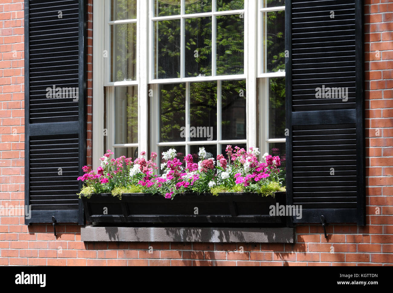 Pink shutters stock photos pink shutters stock images for Elegant windows