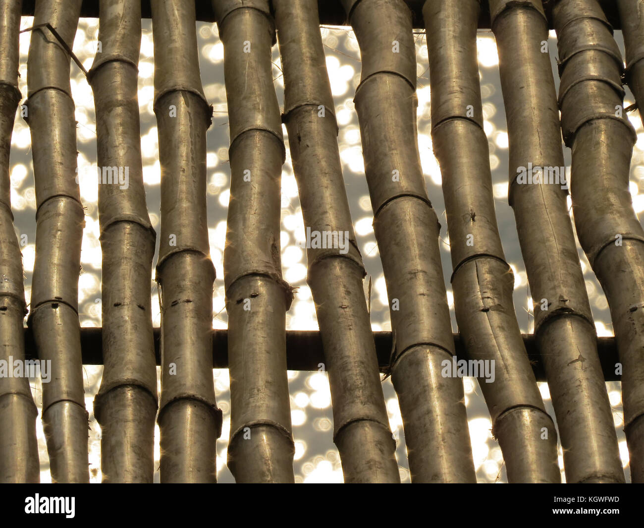 A background of golden bamboos over the backdrop of sparkling water. - Stock Image