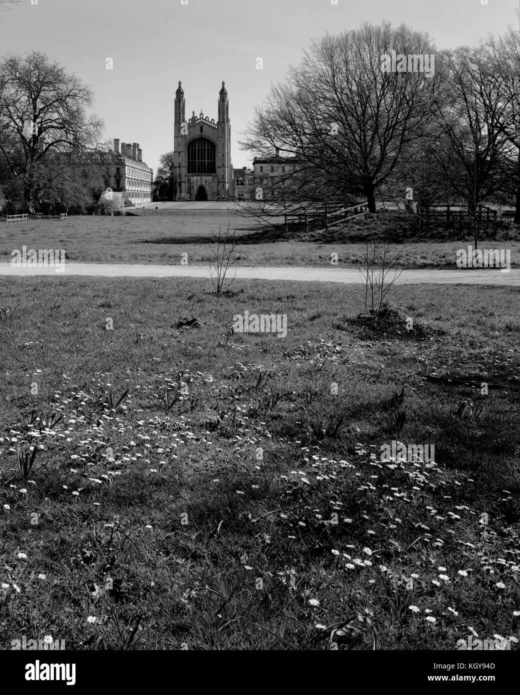 The Cambridge Backs in Springtime - Stock Image