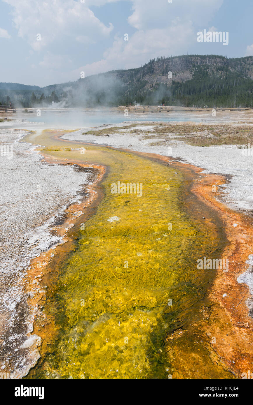 Yellow Sulfur Stream Flows from Steaming Hot Spring in Yellowstone - Stock Image