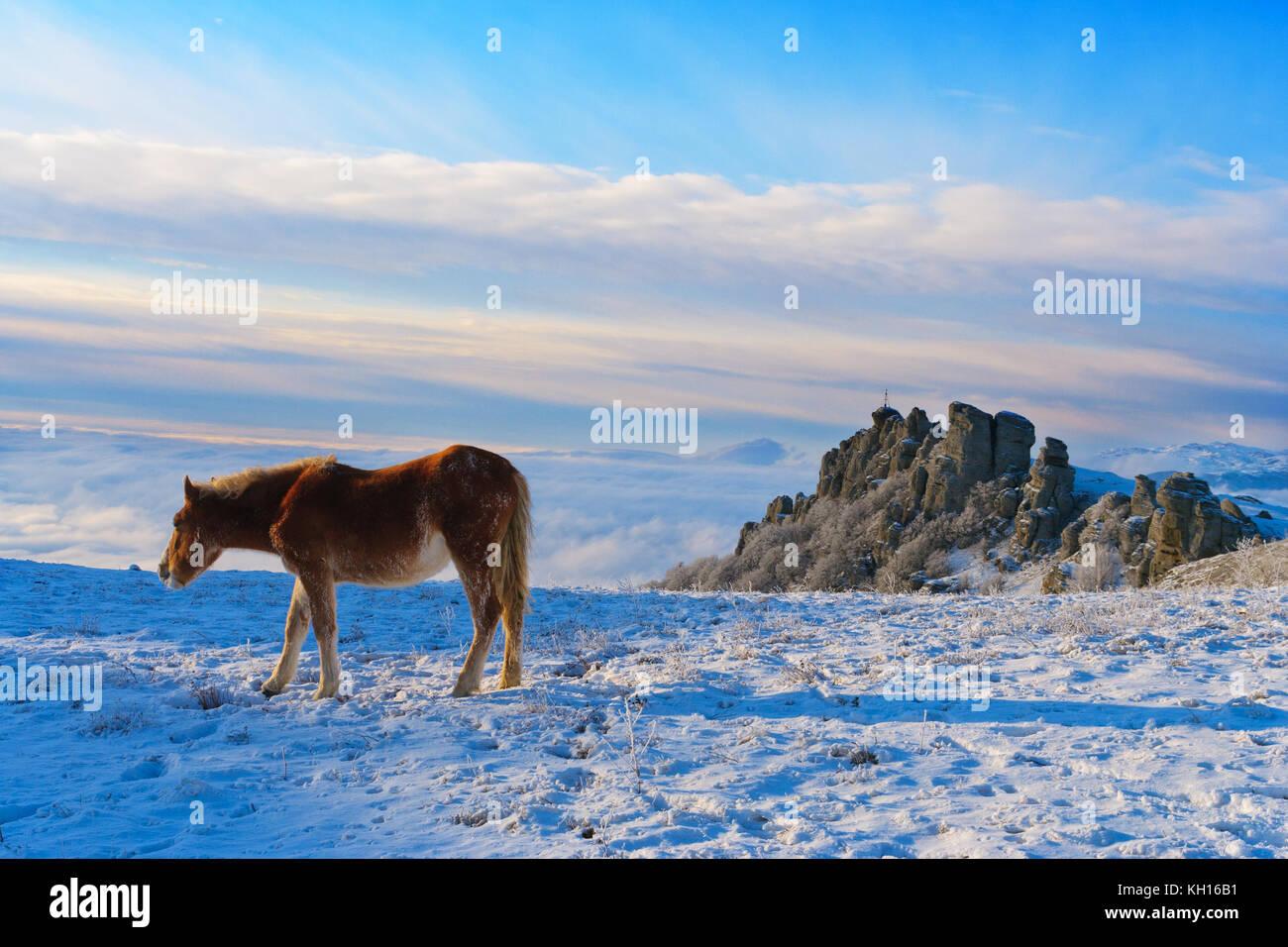 Wild horses in the winter