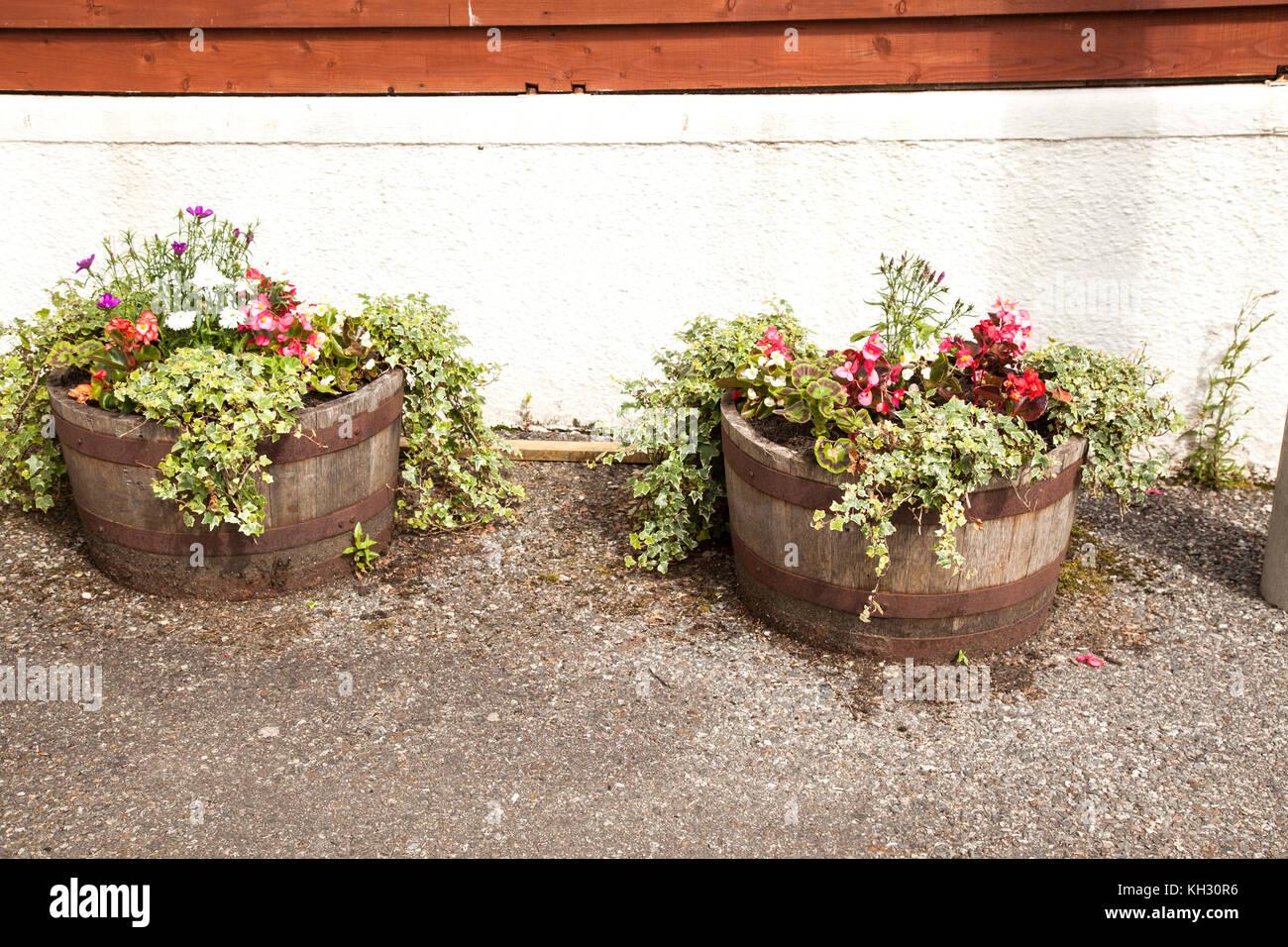 Geranium flowers sky stock photos geranium flowers sky stock images alamy - Care geraniums flourishing balcony porch ...