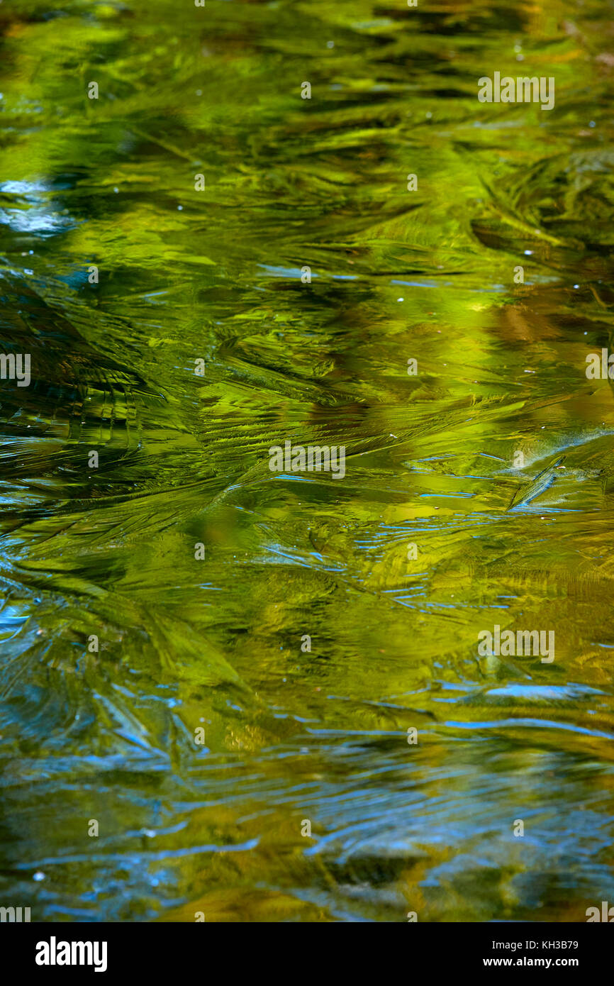 Autumn colours and ice crystals create impressionist masterpiece - Stock Image