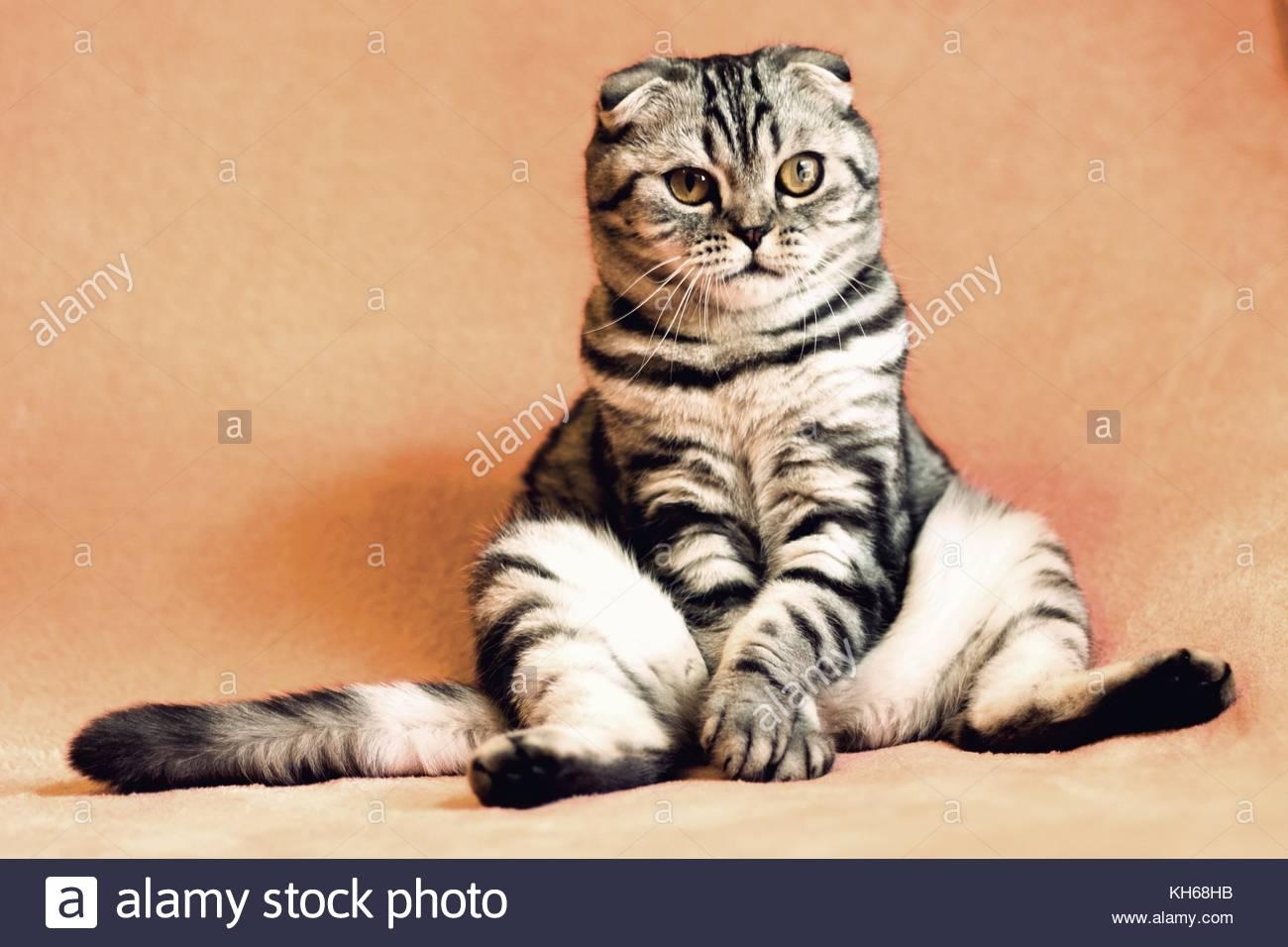 cat-portrait-KH68HB.jpg