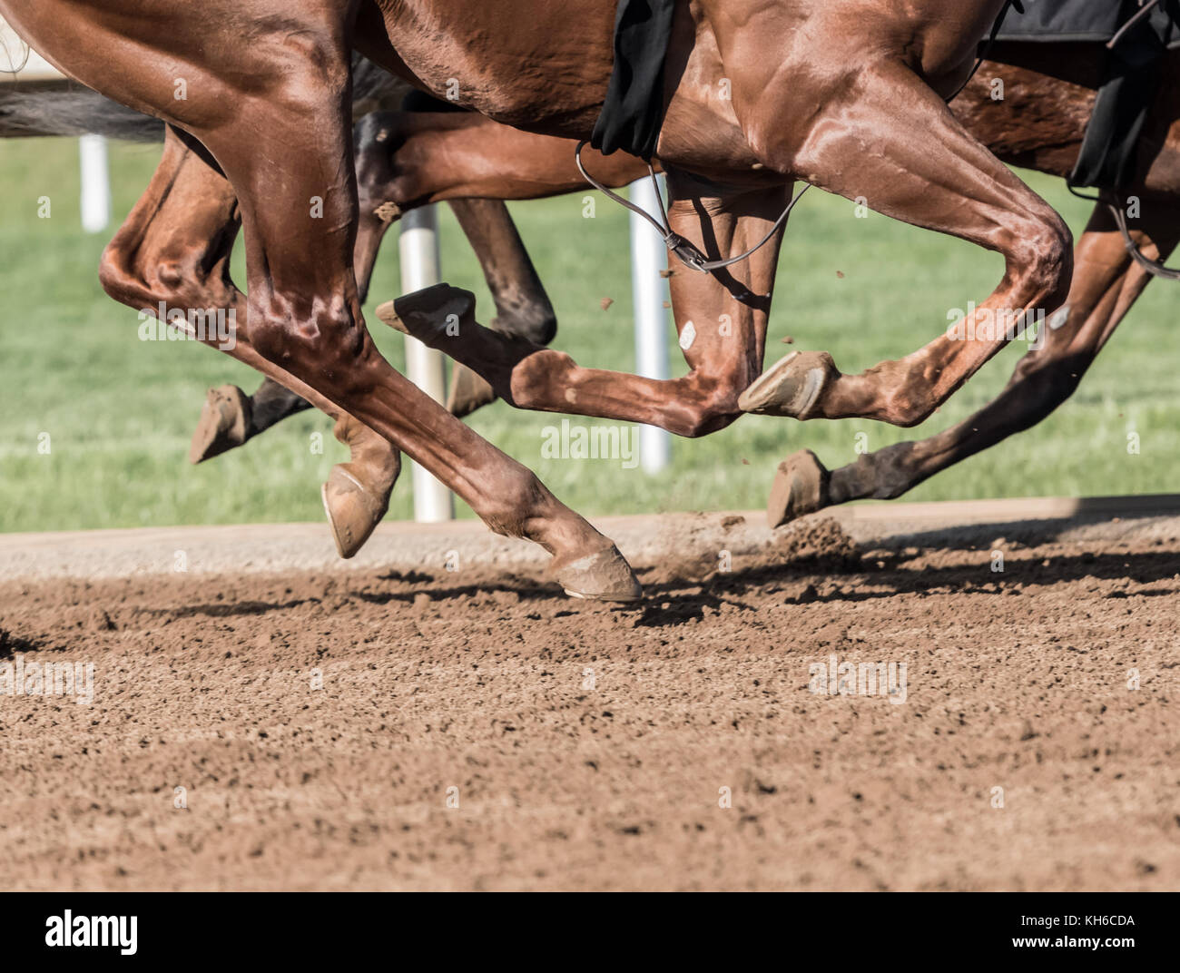 Chestnut Horse Legs Pound the Dirt Track - Stock Image