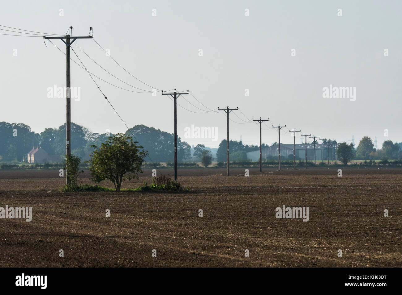 Flat, rural, farmland landscape with long line of wooden poles supporting hi-voltage electricity power lines - Burnby, - Stock Image