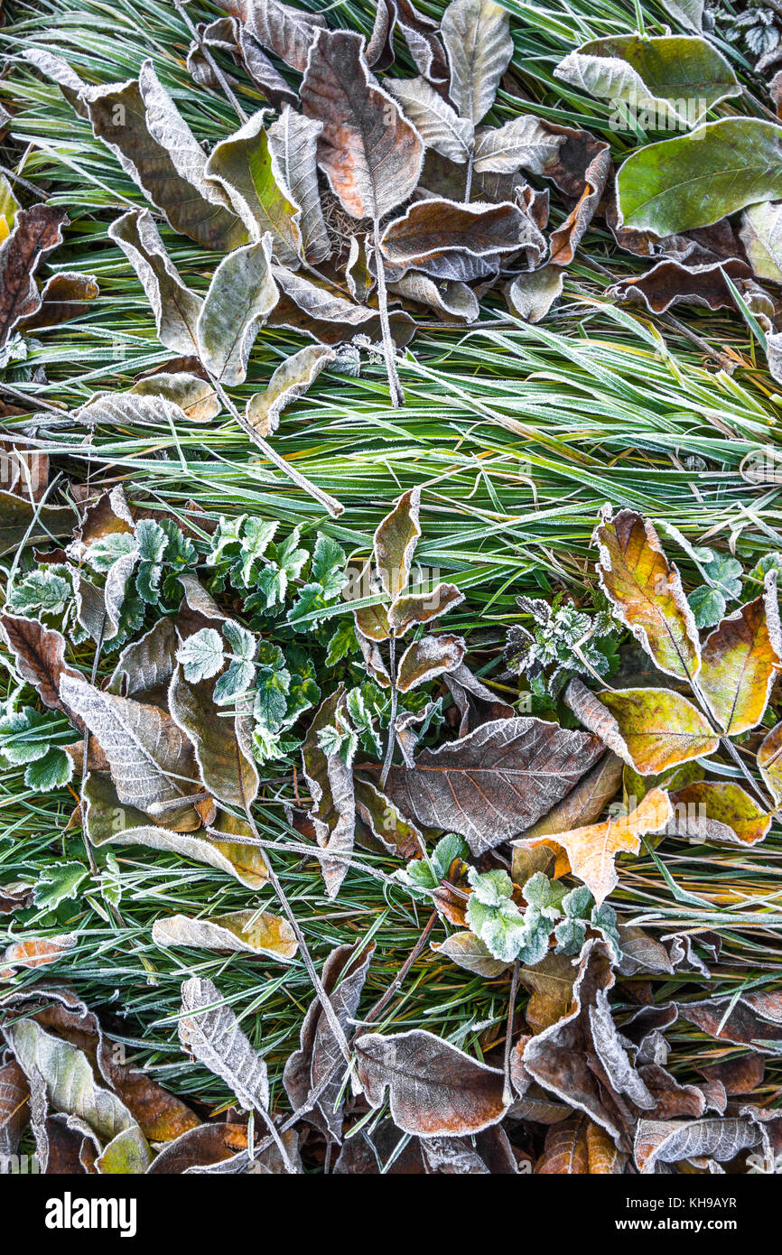Frost on leaves and grass. - Stock Image
