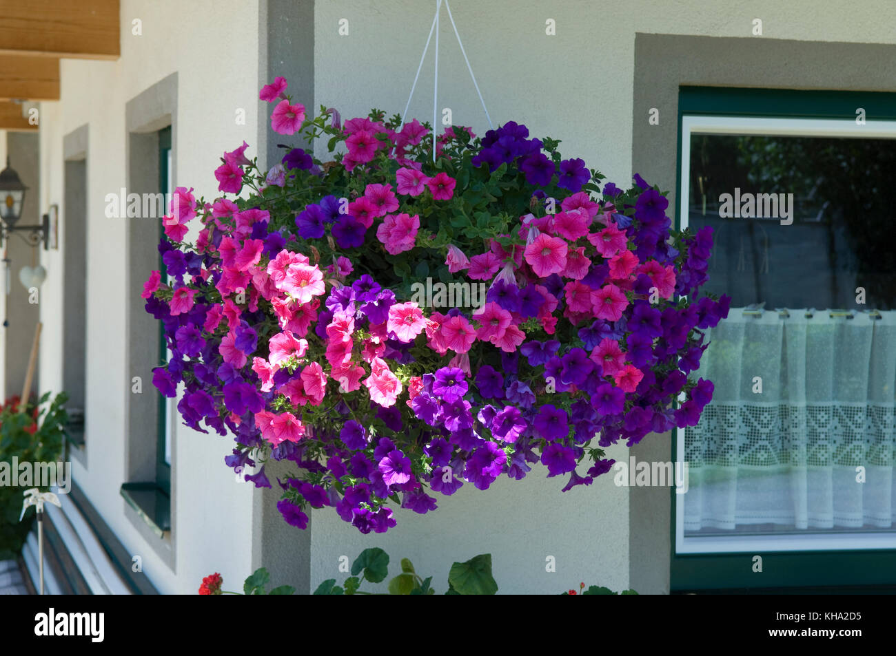 flower box with geraniums and petunias stock photos flower box with geraniums and petunias. Black Bedroom Furniture Sets. Home Design Ideas