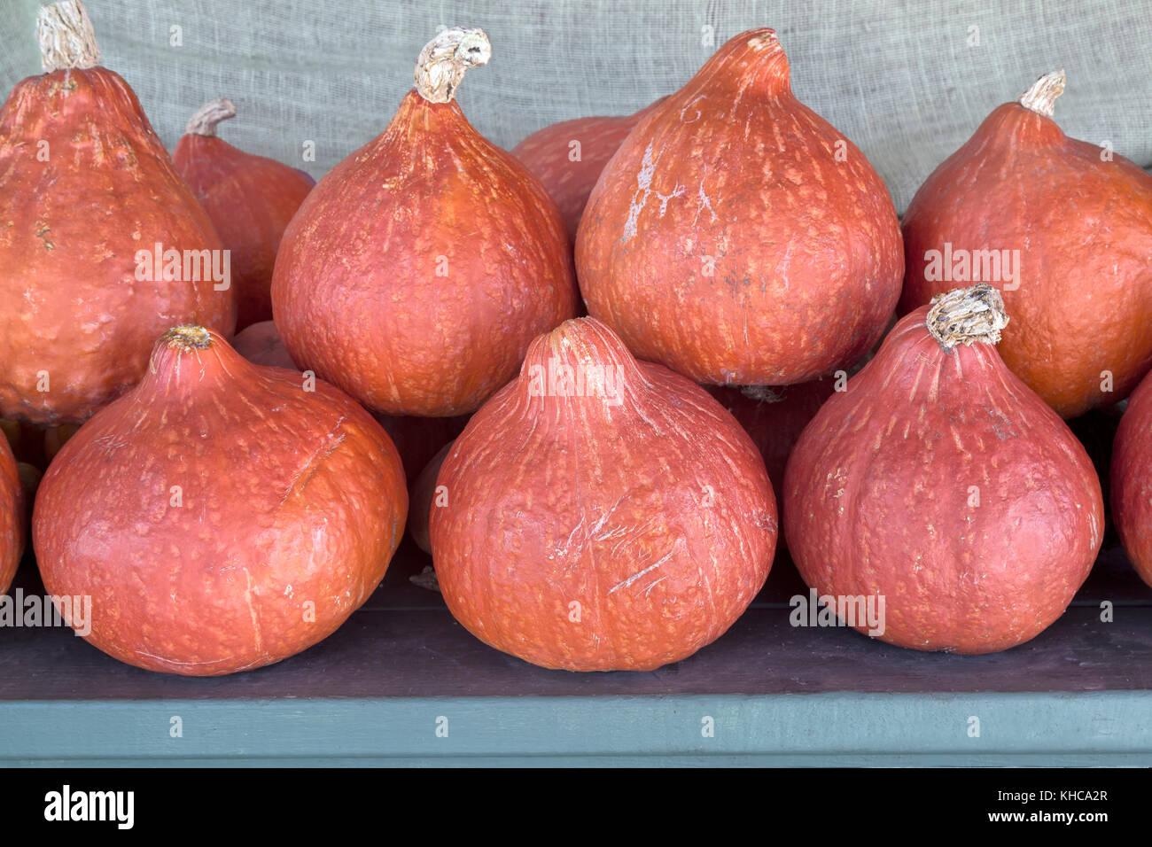 Harvested Red Kuri squash 'Cucurbita maxima'. - Stock Image