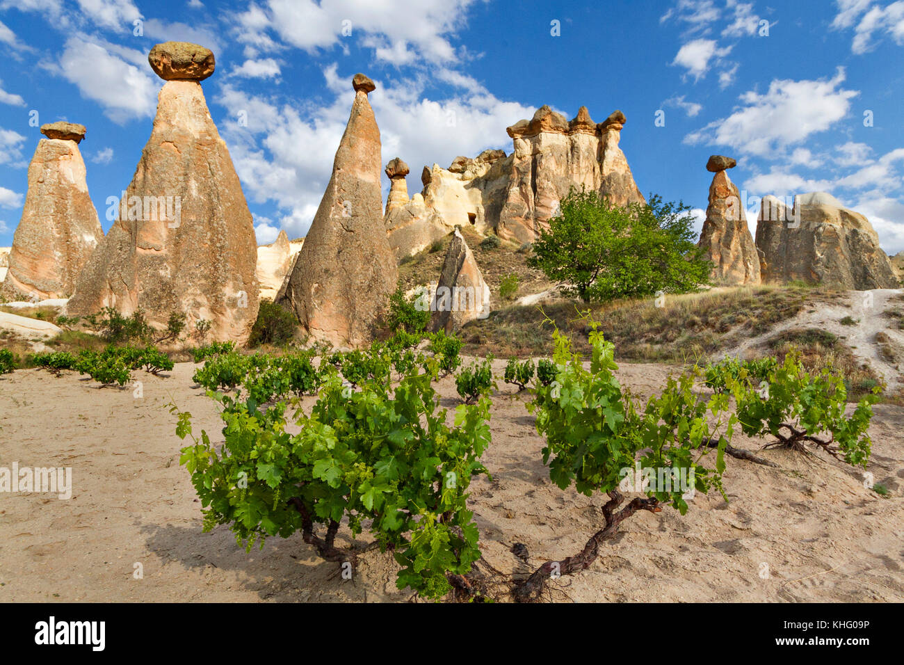 Extreme terrain of Cappadocia with fairy chimneys and volcanic rock formations, Cappadocia, Turkey. - Stock Image