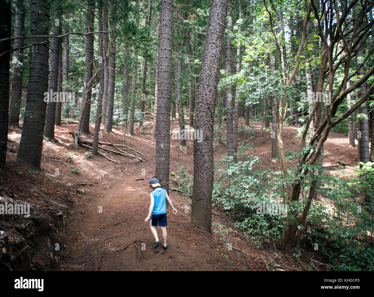 Boy walking through Cook Pines in Nounou Forest - Stock Image