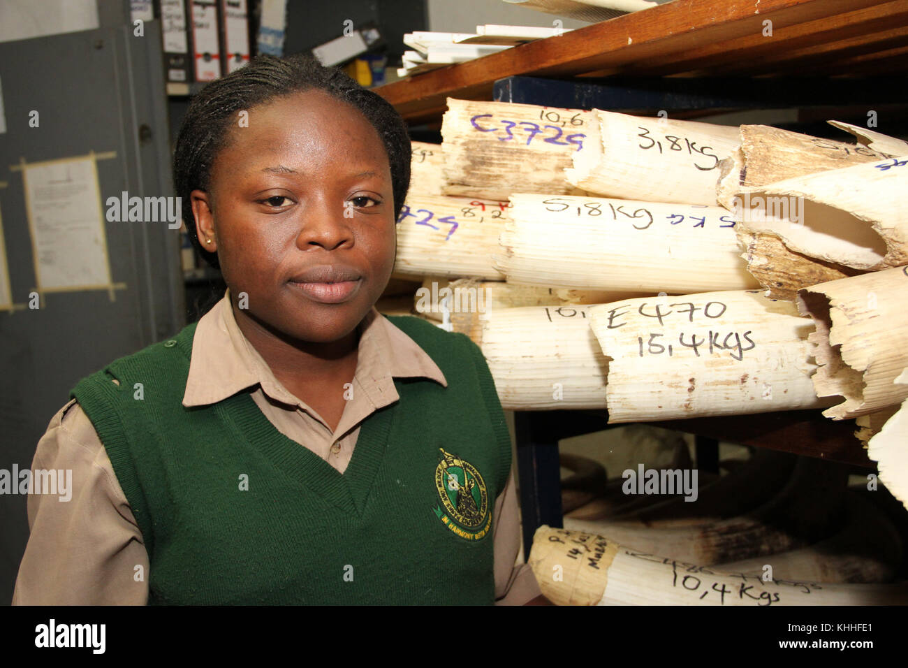 Harare, Zimbabwe - 12 October 2011: Tendai who maintains the ivory digital database at the Parks & Wildlife - Stock Image