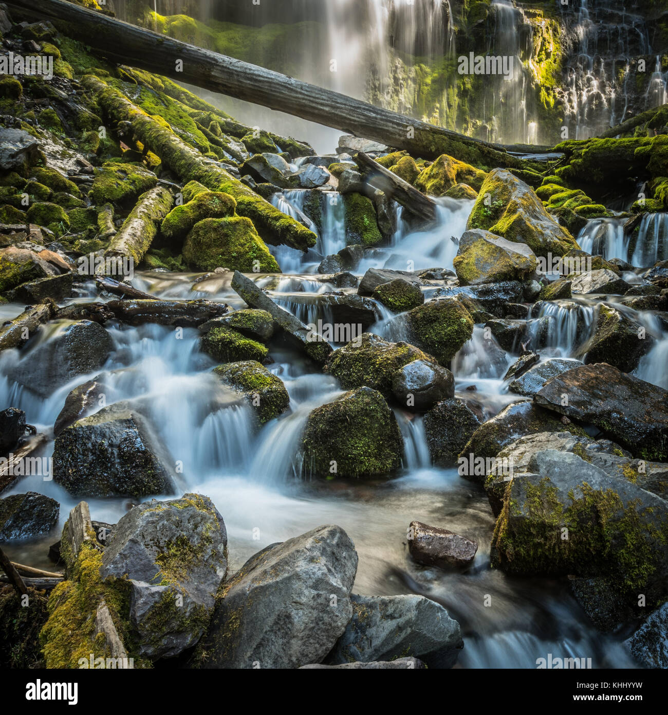 Long Exposure of the Bottom of Proxy Falls in Oregon wilderness - Stock Image