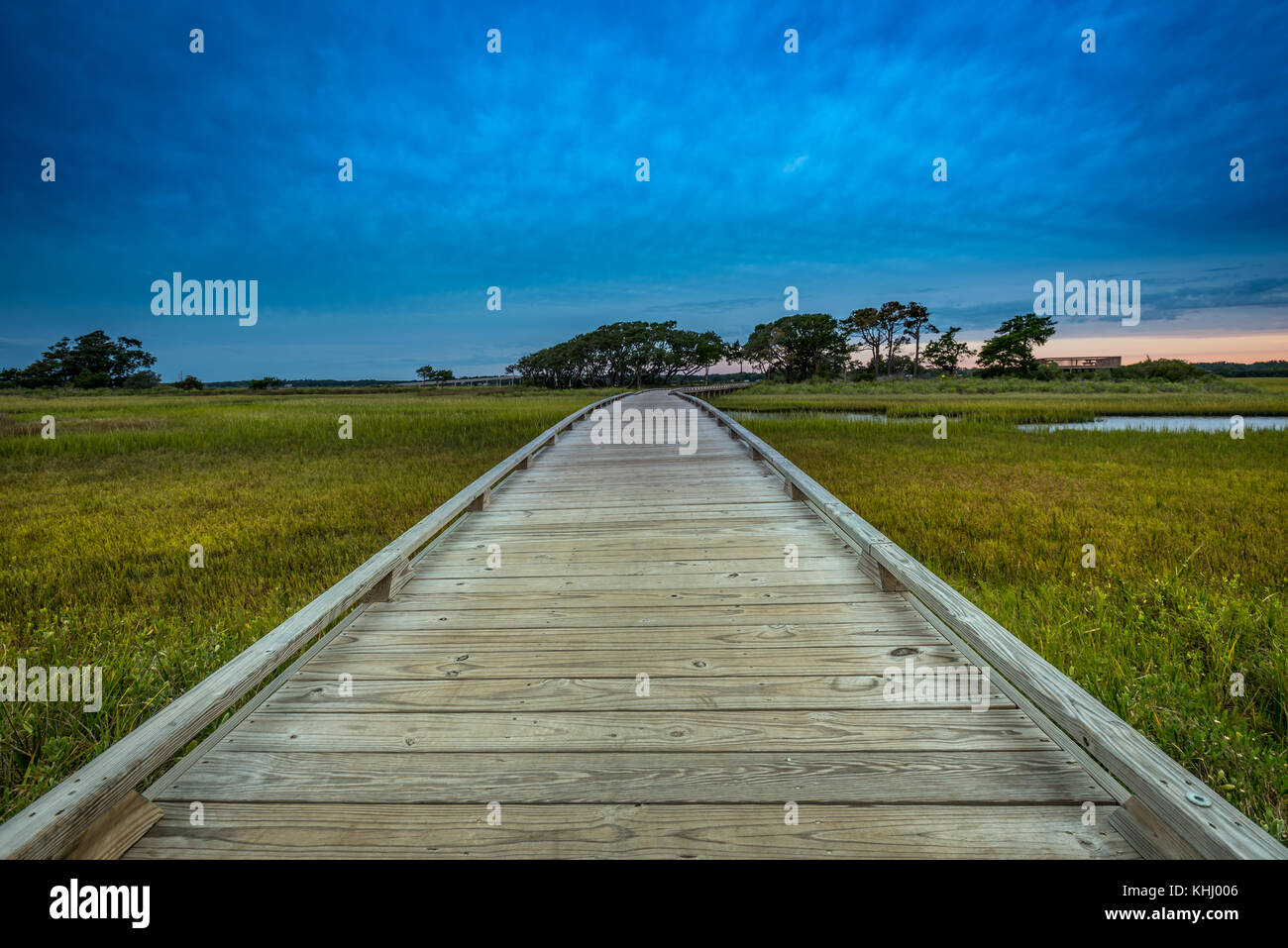 Low Angle of Wooden Boardwalk Through Marsh in Morning - Stock Image