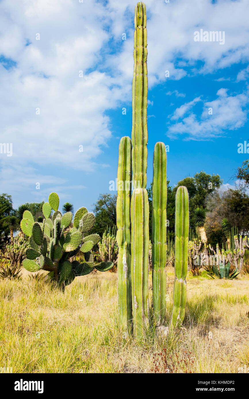 desert cacti in new mexico stock photos desert cacti in new mexico stock images alamy. Black Bedroom Furniture Sets. Home Design Ideas