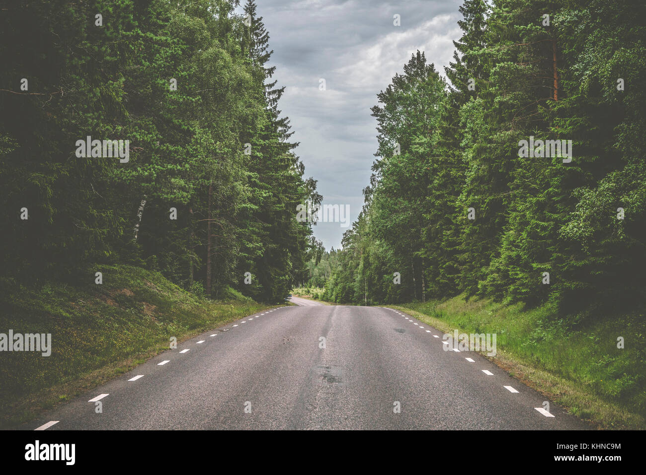 Road with white stripes made of asphalt in a spooky pine tree forest with tall trees and cloudy weather - Stock Image