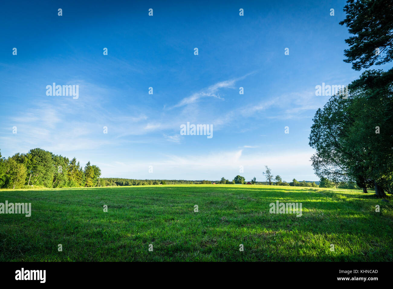 Green fields and blue sky in the summer with trees and sunshine - Stock Image