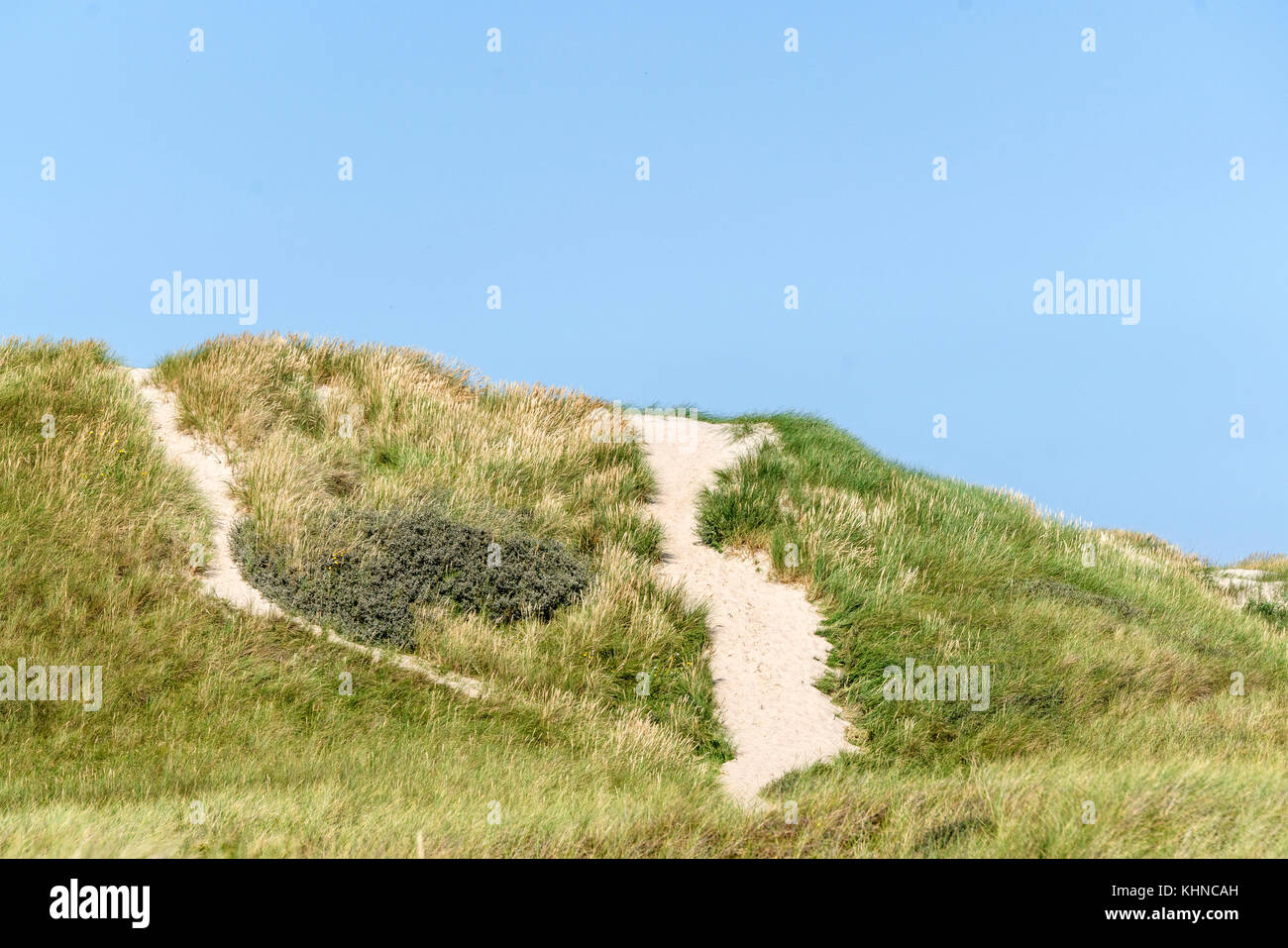 Sand dune in Denmark covered with green lyme grass near the sea - Stock Image