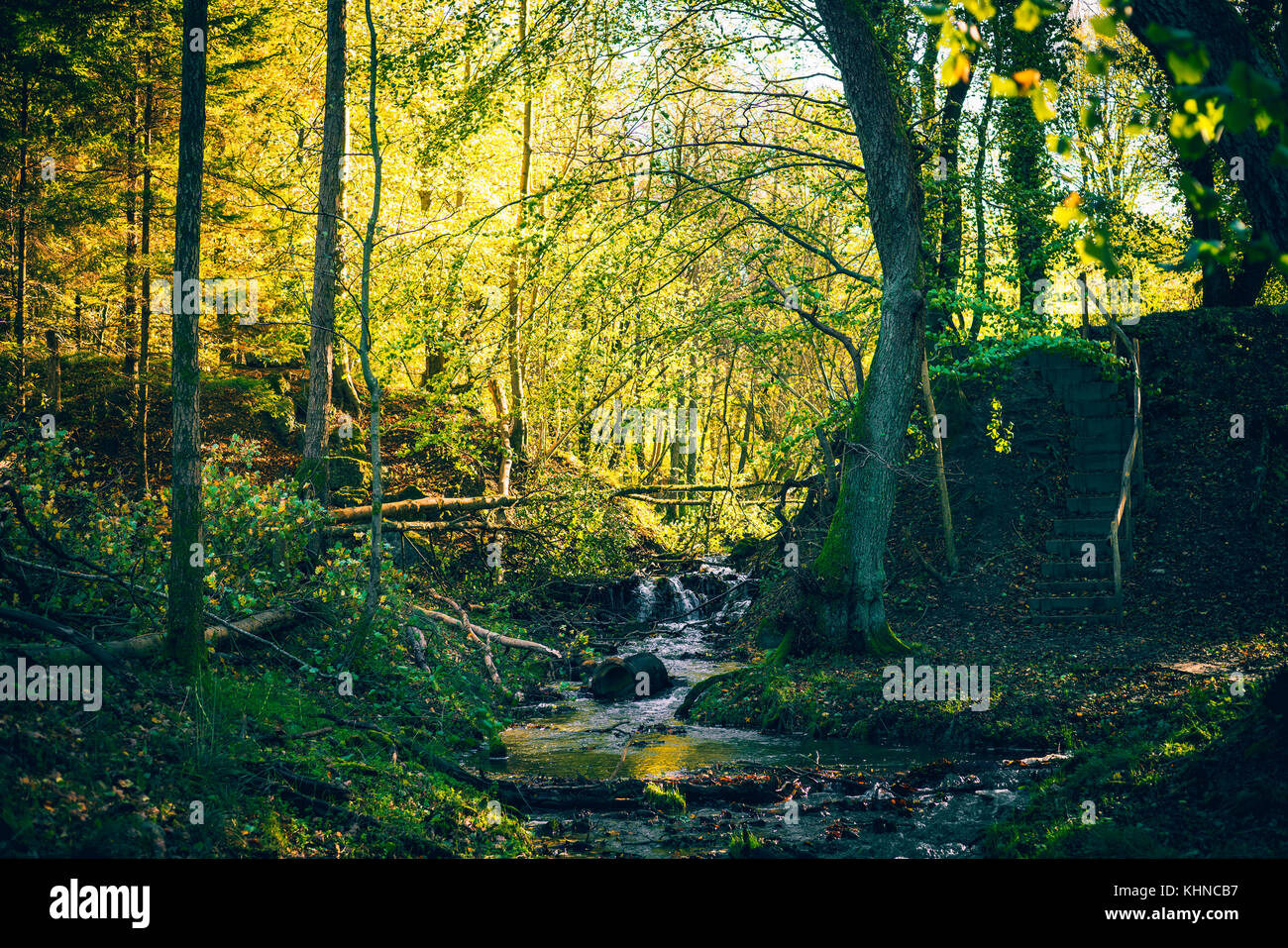 Small river in a forest with colorful trees in autumn colors in the fall - Stock Image