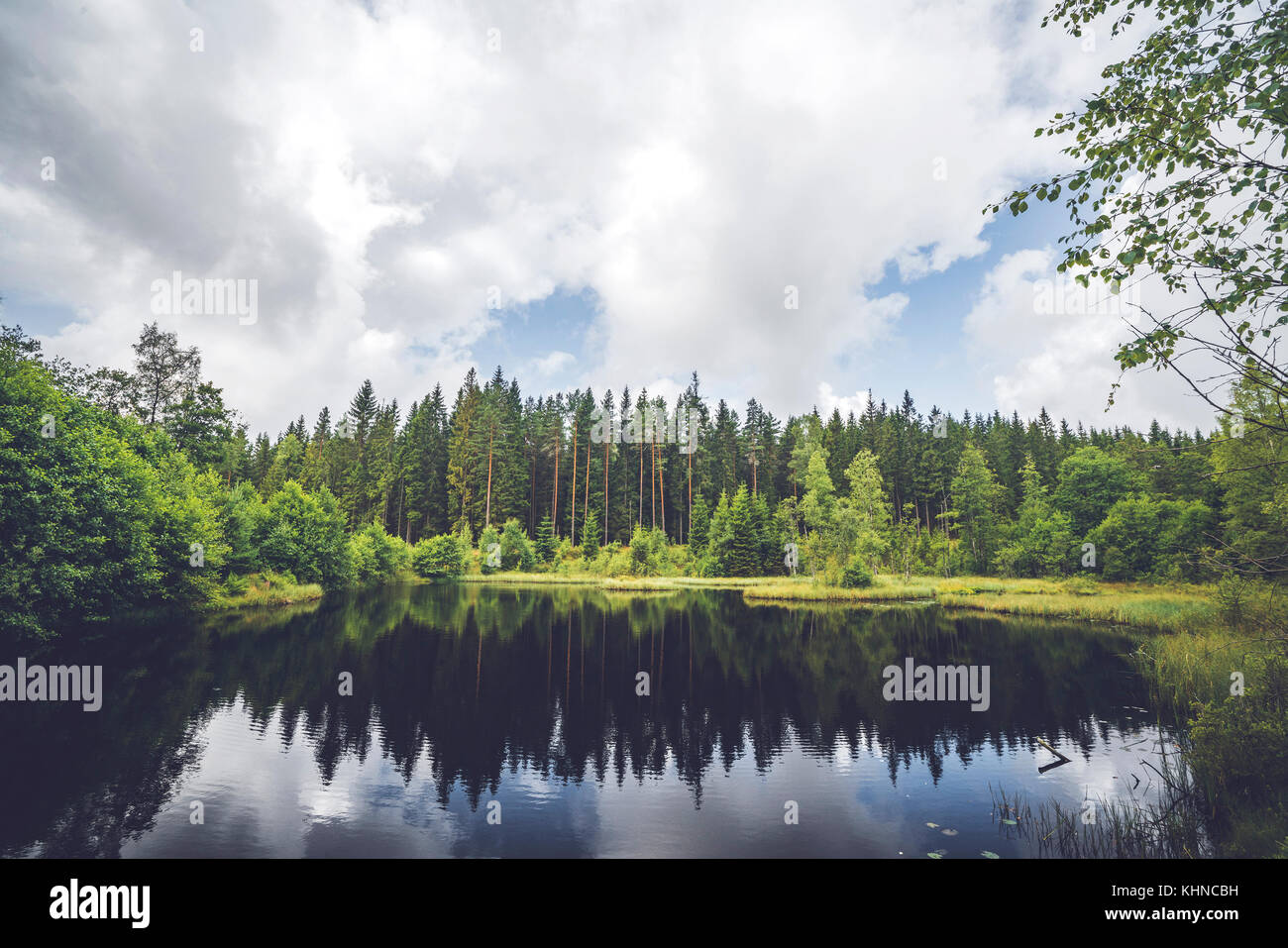 Calm lake wirh dark water in the middle of a forest with pine trees reflecting in the water - Stock Image