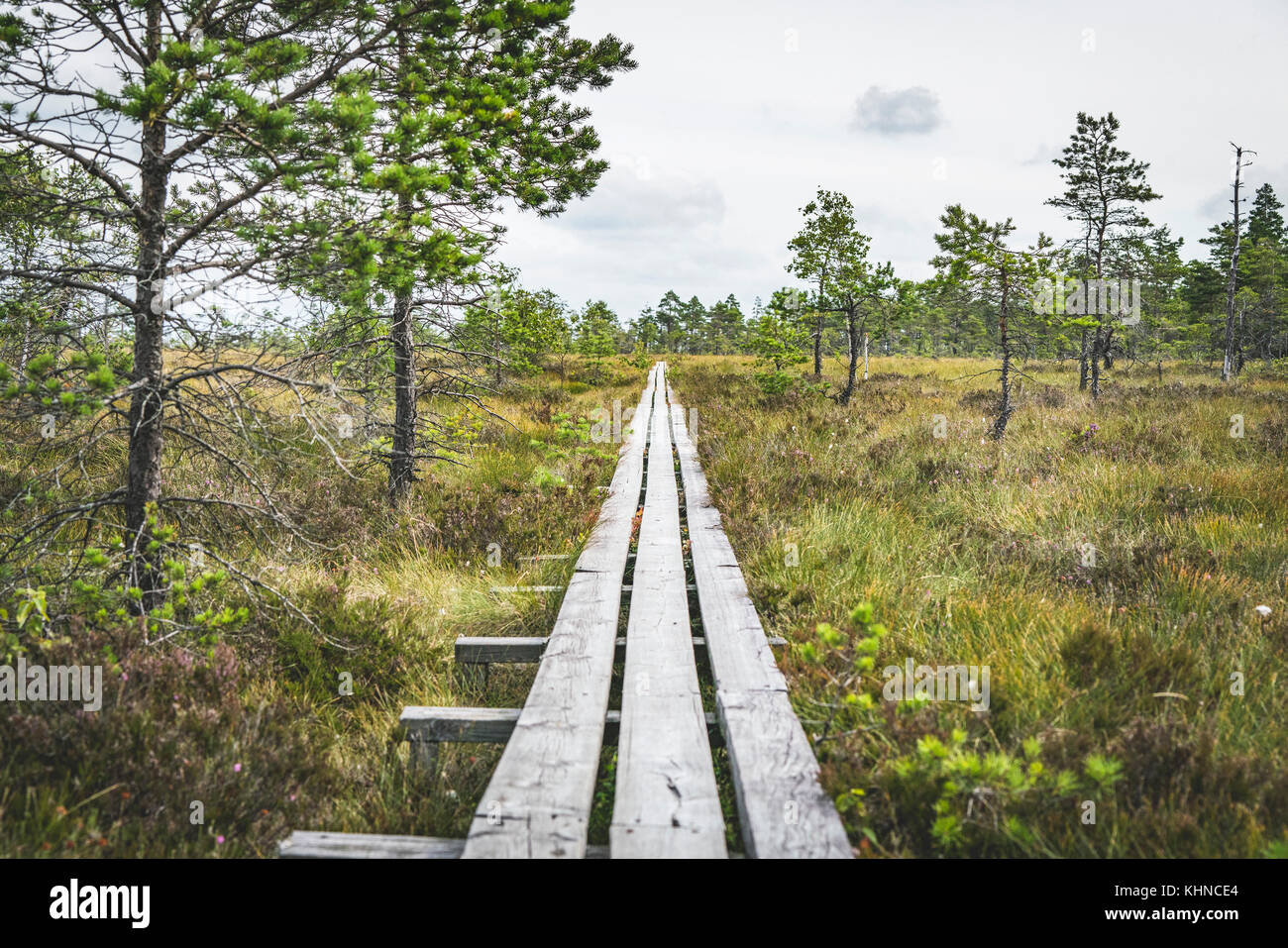 Wooden planks in wild nature with pine trees making a perfect nature trail in the wilderness - Stock Image