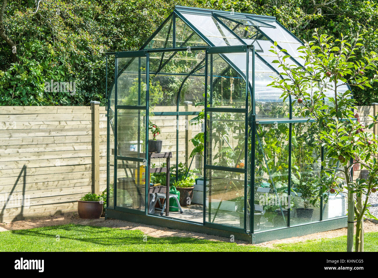 Greenhouse in a garden near a wooden fence in the summer with an apple tree - Stock Image