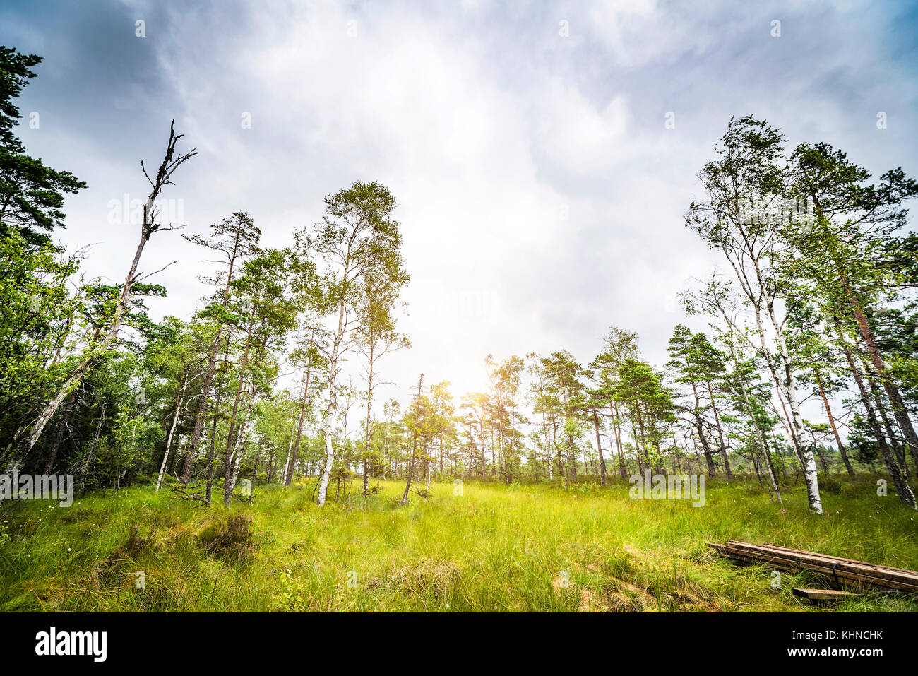 Sun shining through the trees in a clearing in a green forest in the spring - Stock Image