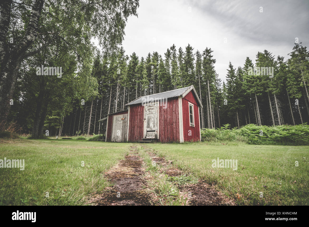 Red cabin in a swedish forest with pine trees with warn planks and weathered paint - Stock Image