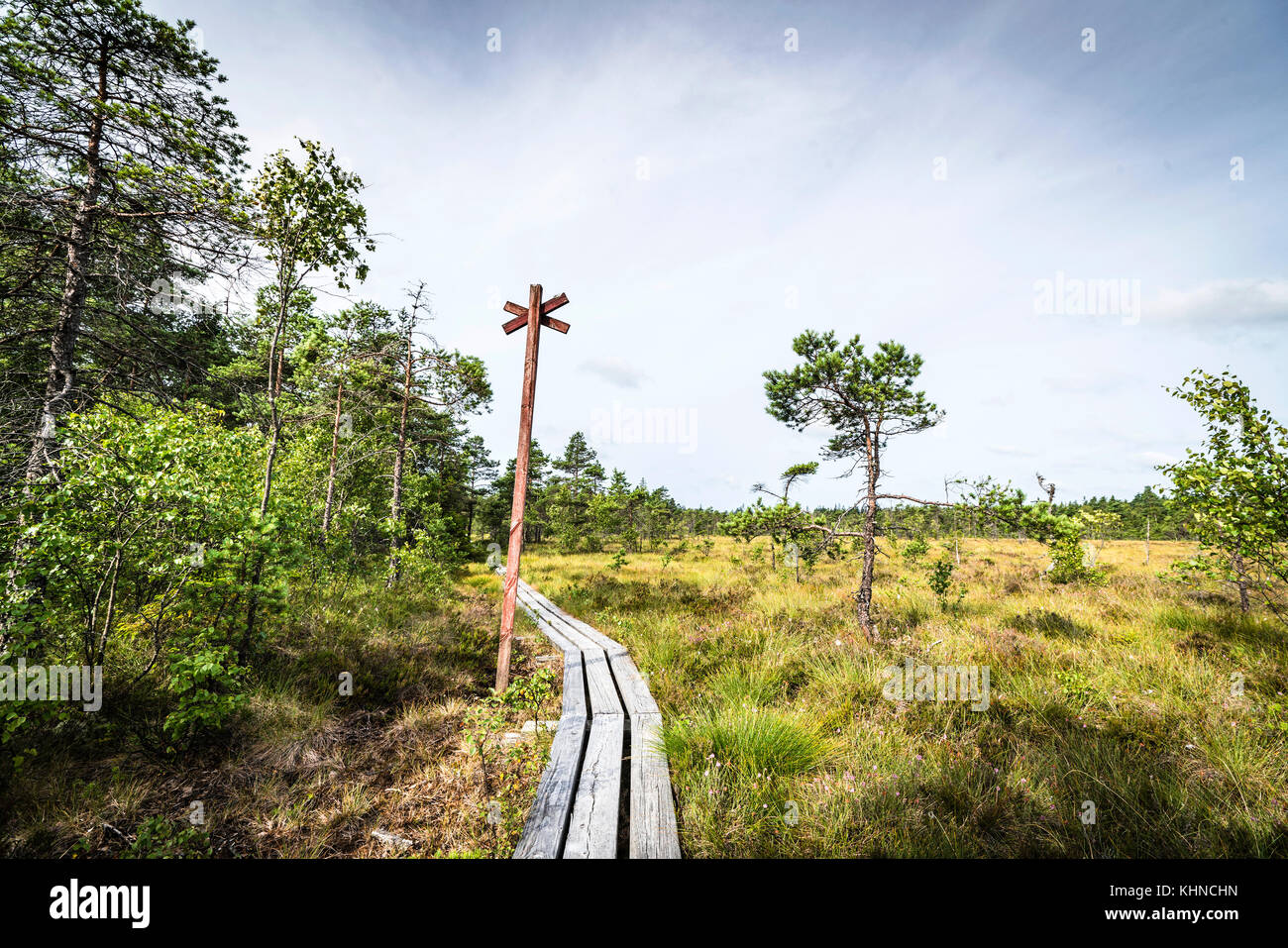 Long wooden nature trail going through a large nature bog with trees and grass and a large red post - Stock Image