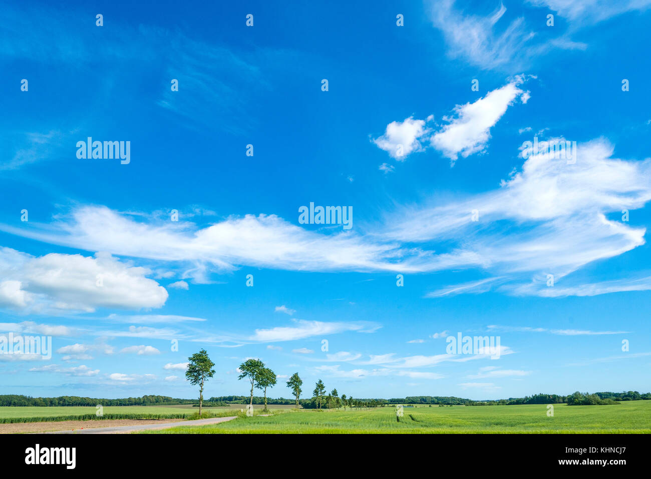 Landscape in the summer with white clouds in the blue sky over green fields - Stock Image