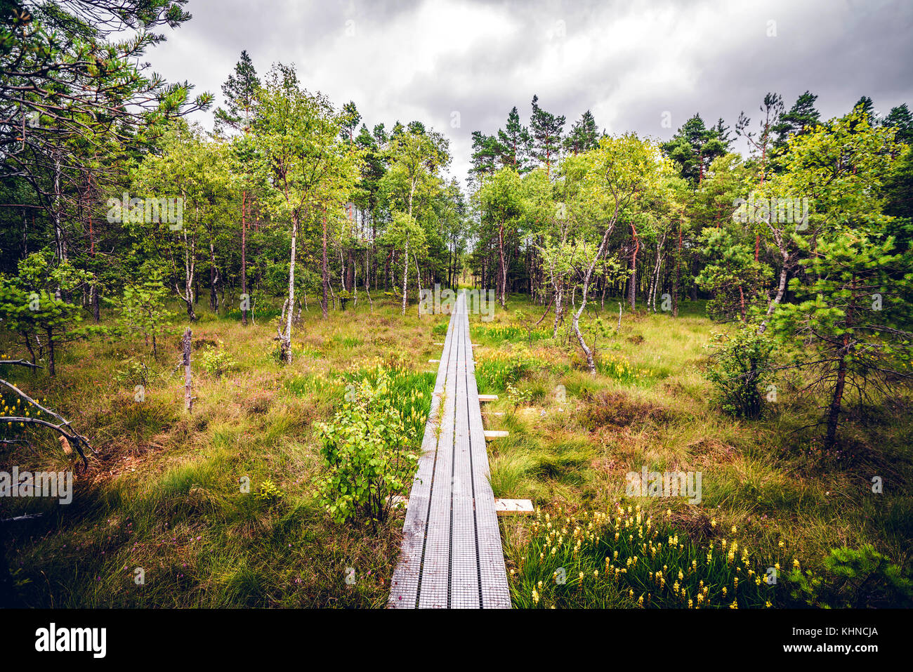 Wooden nature trail made of planks in a forest landscape with trees and grass - Stock Image
