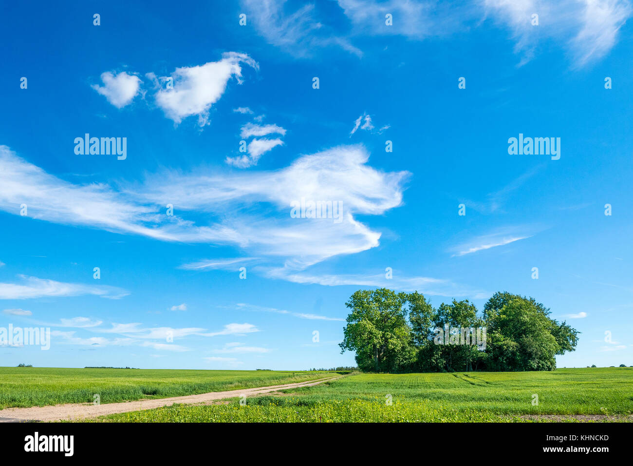 Summer landscape with magical cloud imagination figures on a blue sky over green field - Stock Image