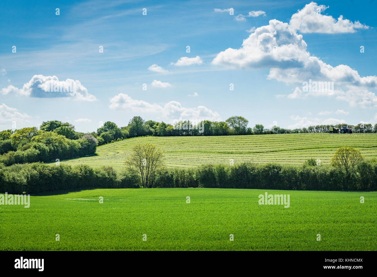 Rural green fields in the spring with blooming trees with green leaves under a blue sky - Stock Image