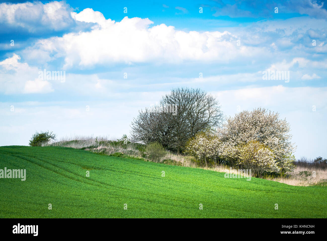 Green meadow in the spring with blooming trees and plants - Stock Image