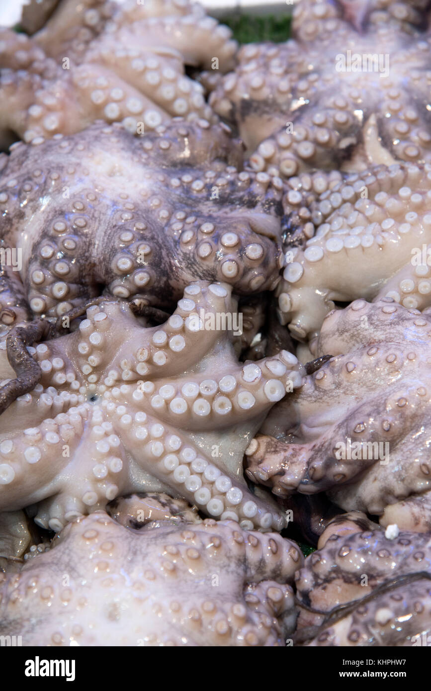 Fresh octopus on display on ice, with at Roma fish market - Stock Image
