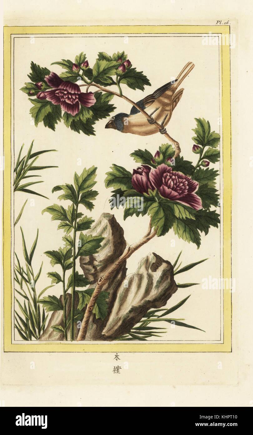 mauve hibiscus stock photos mauve hibiscus stock images alamy. Black Bedroom Furniture Sets. Home Design Ideas