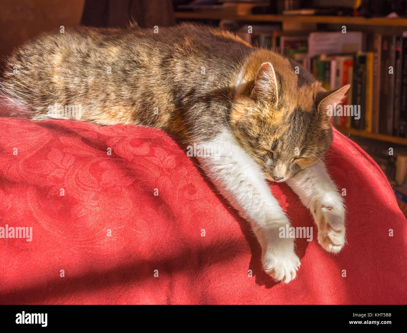 Cat sleeping on arm of sofa in warm sunlight. - Stock Image