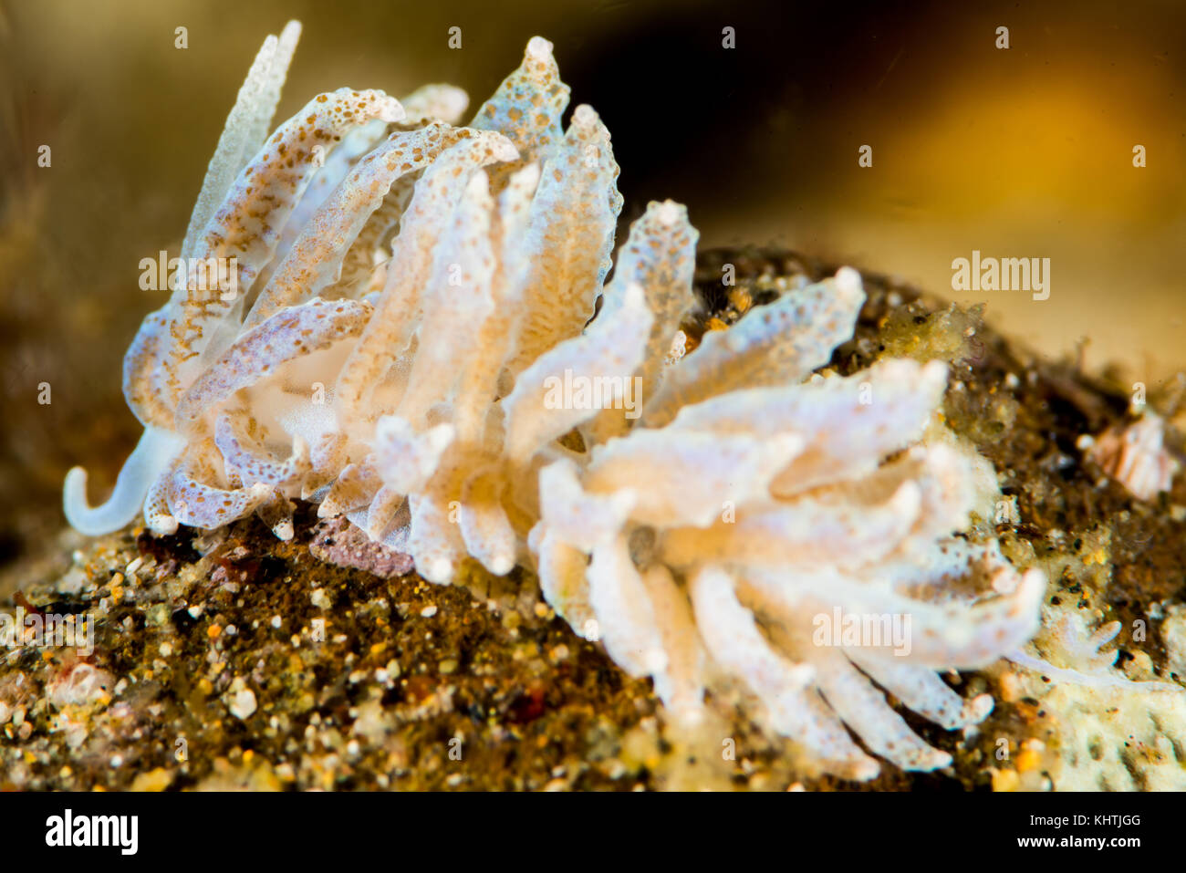 ap bio sea slug essay Respond to two and only two of the following a explain how the metabolic from a sea slug that lives in an intertidal habitat ap biology essay questions.