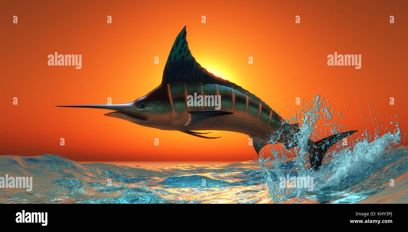 Atlantic Blue Marlin - An Atlantic Blue Marlin jumps out of the blue ocean in a spectacular leap at sunset. - Stock Image