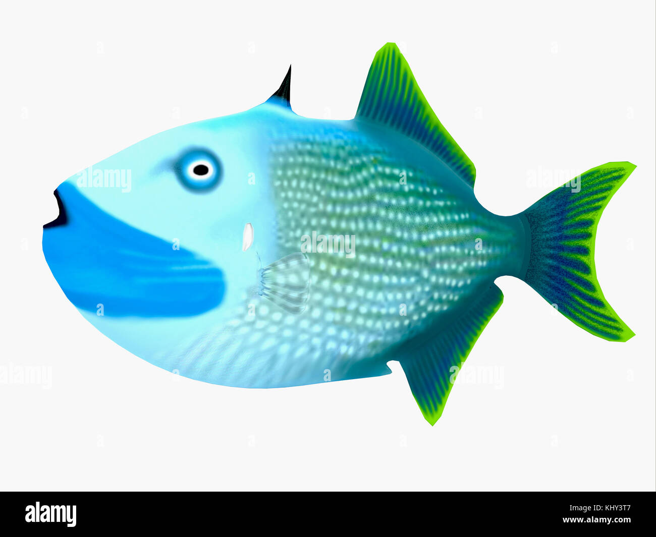 Blue Jaw Triggerfish - The Blue Jaw Triggerfish is a saltwater species reef fish in tropical regions of major oceans. - Stock Image