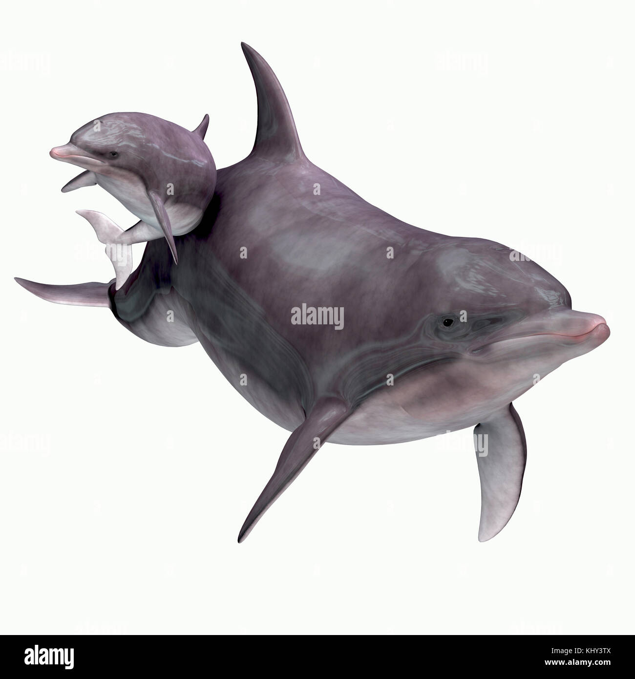 Bottlenose Dolphin Mother and Baby - The Bottlenose dolphin inhabits warm and temperate seas and searches for forage - Stock Image