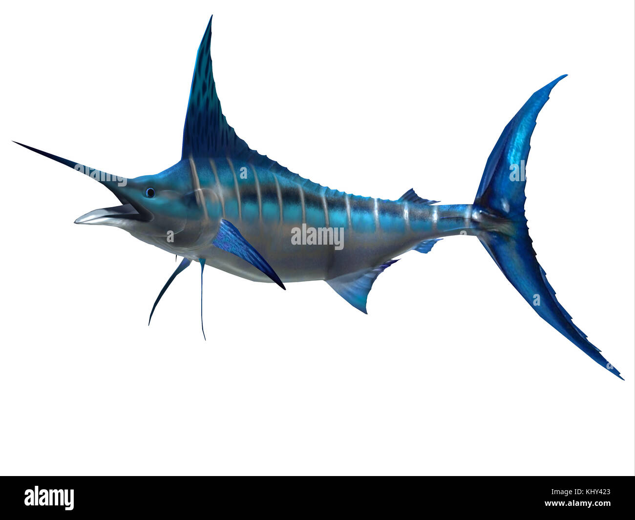 Marlin Sport Fish - The Blue Marlin is a favorite fish of sport fishermen and one of the predators of the Atlantic - Stock Image