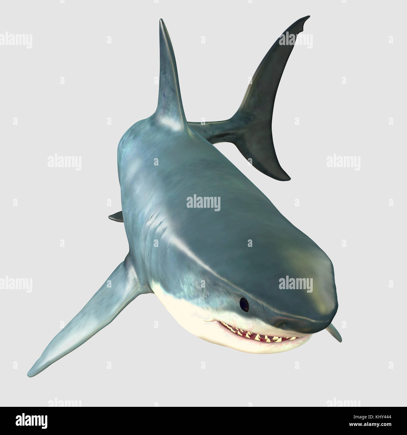 Overview Great White Shark - The Great White Shark is one of the largest predators in the ocean and inhabits temperate - Stock Image