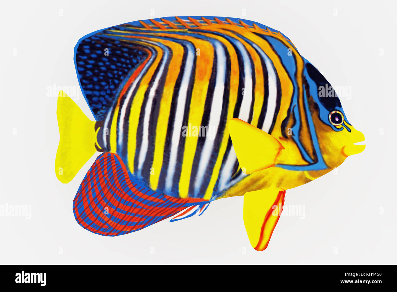 Royal Angelfish - The Royal Angelfish is a saltwater species reef fish in tropical regions of Indo-Pacific oceans. - Stock Image
