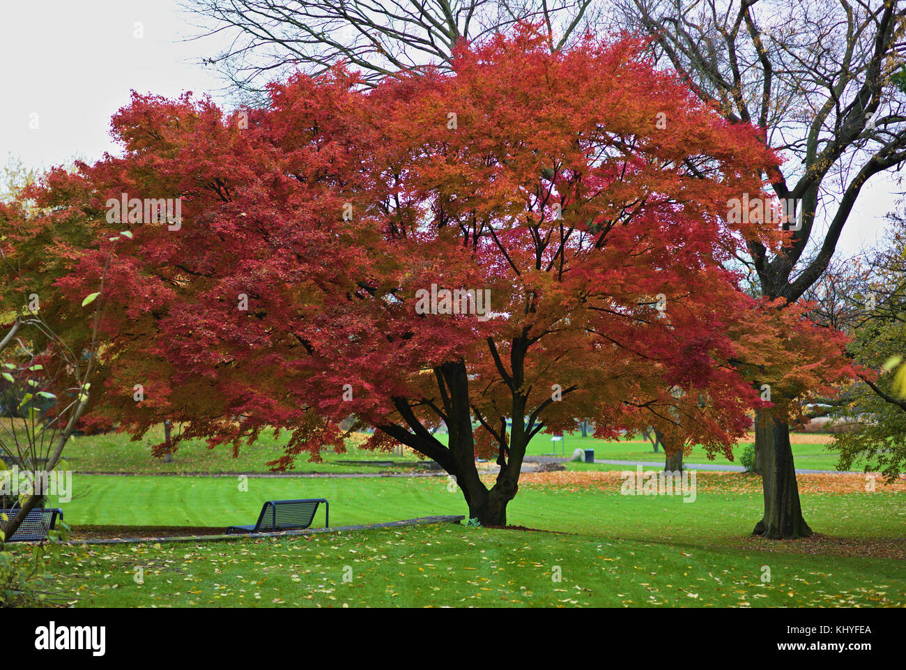 autumn-trees-with-coloured-leaves-KHYFEA