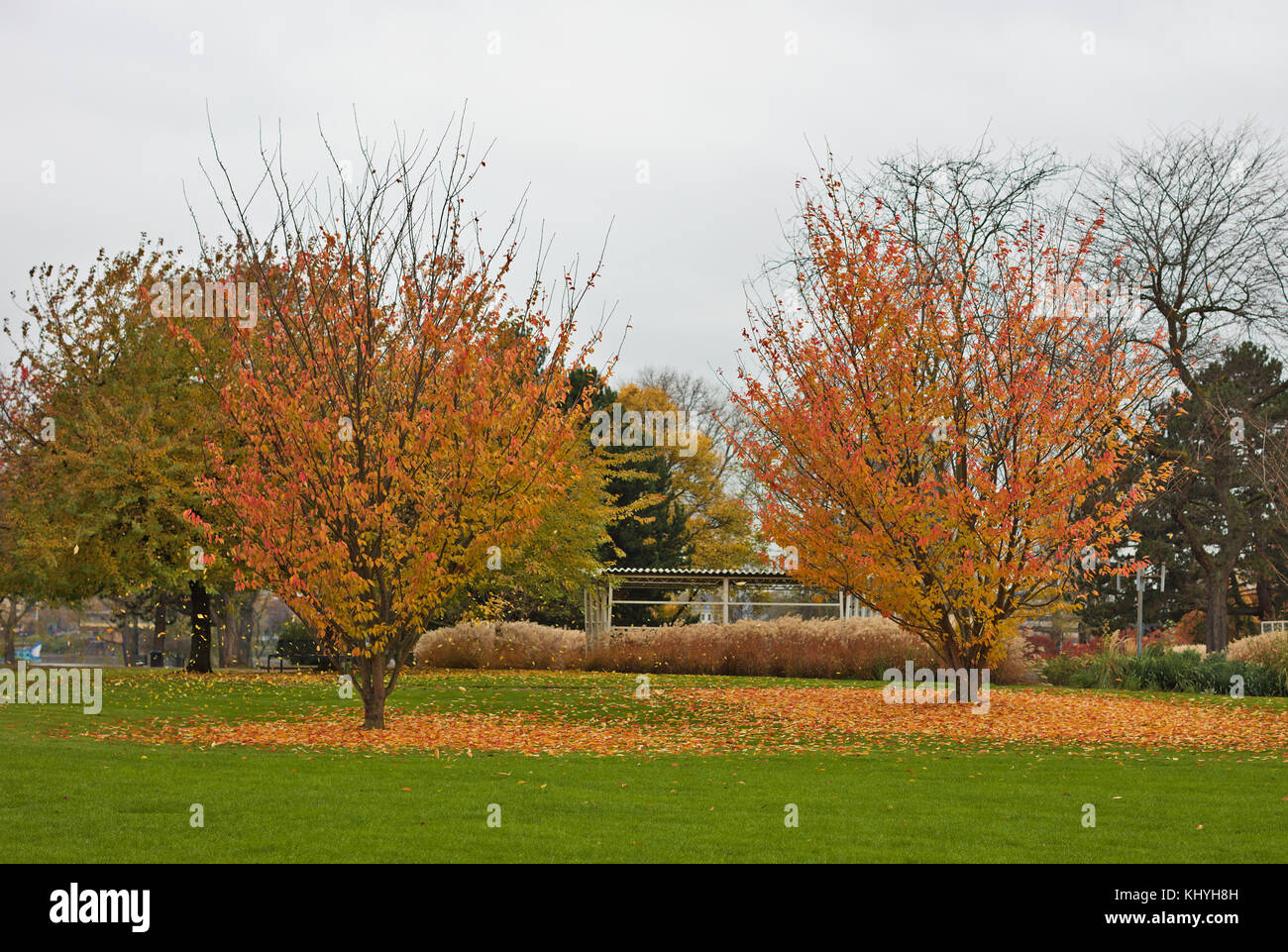 autumn-trees-with-coloured-leaves-KHYH8H